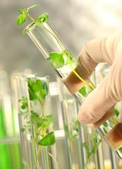 Seminario Economía del bioconocimiento